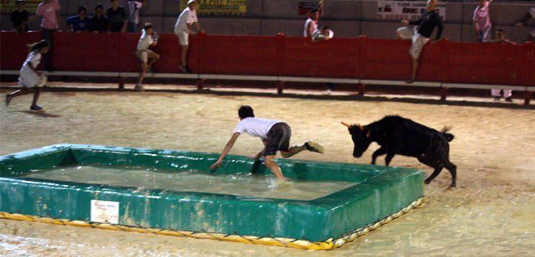 taureaux-piscine